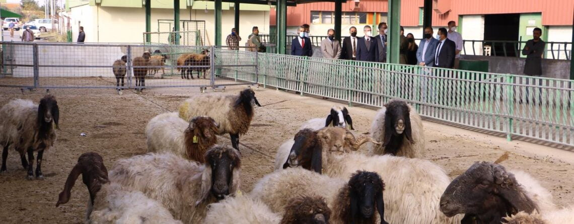 Northern Iraq